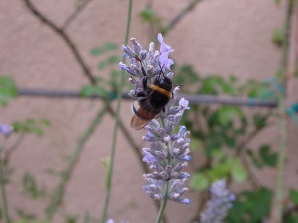 Lavender 4 HappyFace313