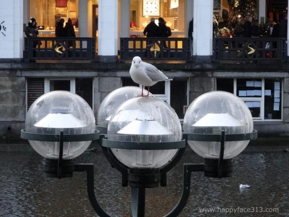 a vey serene seagull / eine sehr gelassene Möwe
